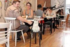 kittycafe