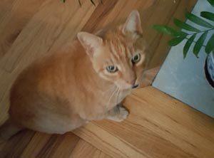 indoor outdoor cat