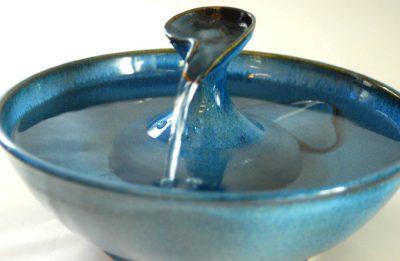 cat water fountain stream