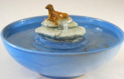 sea lion cat water fountain