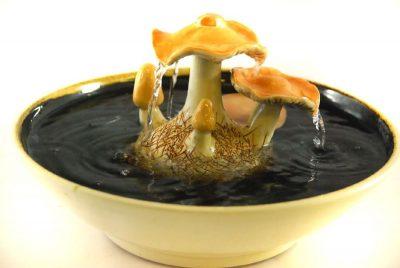 cat drinking fountain toadstool