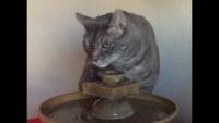 Slo-mo Thirsty Cat!