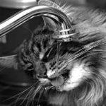 cat fountain reviews