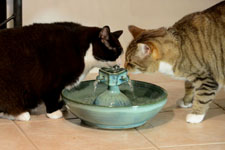Veterinarians Recommend Cat Fountains