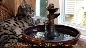 The-Ultimate-in-Cat-Water-Fountains4
