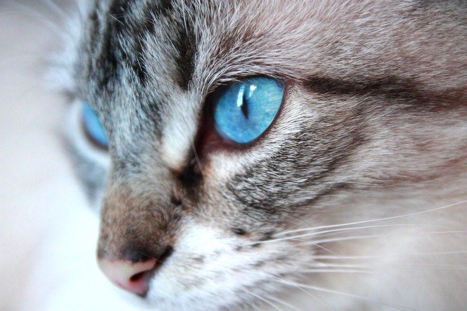 Ohos Azules Photo